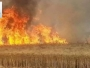 Burning wheat and barley farms foreign agendas seek to destroy the Iraqi national economy.