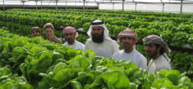 خطة المحاصيل المحلية تعزز الأمن الغذائي في أبوظبي