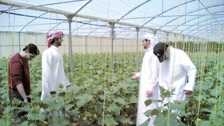 أبوظبي تقهر الظروف المناخية وتسجل قفزة في إنتاج الخضروات