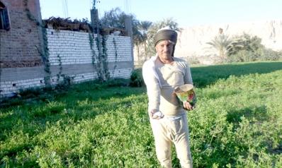 زيادة أسعار السماد تعمق أزمات المزارعين المصريين