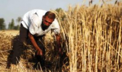 العراق يخسر بسبب شح الأمطار 30 في المئة من محصول القمح