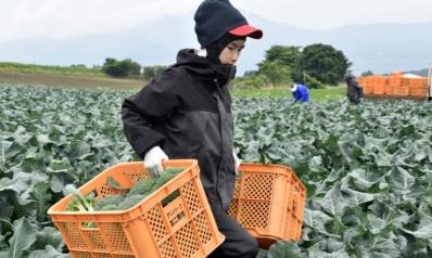 أخيرا.. اليابان تفتح أبوابها للمهاجرين بهذه المجالات