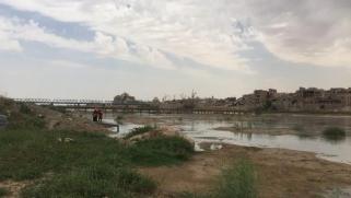 لماذا حظر العراق زراعة الأرز ؟