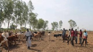 التطرف الإسلامي والنزاعات الإثنية.. مزيج متفجر في وسط مالي