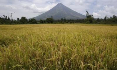 وزير مصري: اتفاقيات لاستيراد الأرز نهاية الشهر المقبل