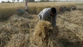 العراق يوقع اتفاقا لاستيراد القمح والأرز من أميركا