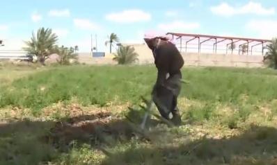 هل تكون الأنبار سلة العراق الغذائية؟