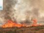 Iraqi farms burn, heavy losses borne by citizens