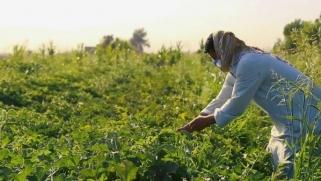 شاهد.. فرصة ذهبية يوفرها كورونا للزراعة في العراق