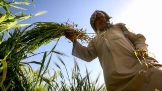 أذرع إيران في العراق تحبط مشروع الشراكة السعودية العراقية في مجال الزراعة