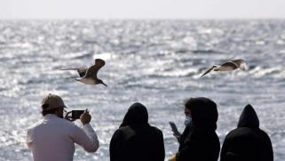 أجراس الإنذار البيئية تدق في الخليج