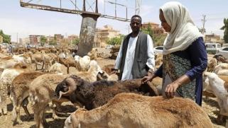 السودان يطلق مبادرة مصدري المواشي لدعم الاقتصاد