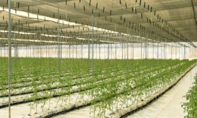 لتقديم معلومات موثوقة لصُناع القرار.. قطر تجري تعدادا زراعيا شاملا