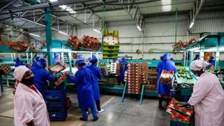 العالم يواجه مفارقة مزدوجة: الجوع والسمنة المفرطة